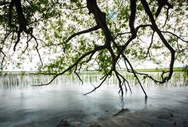 Brighton Wetland, Eastern Lake Ontario Coast (Photo by David Coulson)