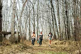 Walking through an enchanted forest full of slim birch trees (Photo by NCC)