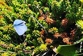 A butterfly that I encountered during fieldwork (Photo by NCC)