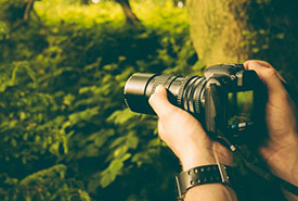 Photographing nature (CC0 Public Domain)
