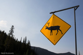 Caribou crossing sign close to Kootenay Pass on Canada's Highway 3. (Photo by David Moskowitz)