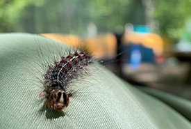 A caterpillar crawling on my pants (Photo by Jensen Edwards/NCC staff)