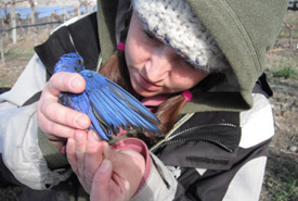 Catherine Dale with bluebird (Photo by Angela Boag)
