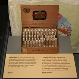 This collection of crops seeds is in a case on the Great Depression in the new Prairies Gallery. (Photo courtesy of Manitoba Museum)