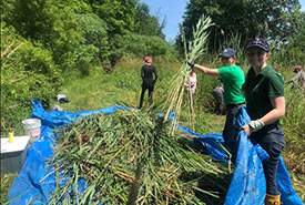 Stewardship tasks, like removing invasive species, are a lot easier when you work together. (Photo by NCC)