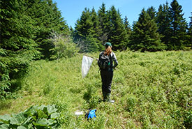 Claire trying to catch a butterfly with her net. (Photo by Mitchell MacMillan/ NCC PEI conservation planner)