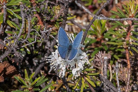 Cranberry blue. (Photo by Claire Elliott/NCC intern)