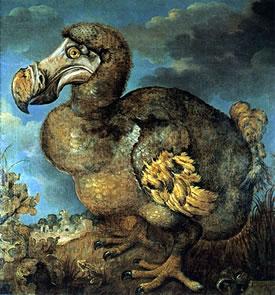 Dodo (Painting by Jan Savery, circa 1589-1654)