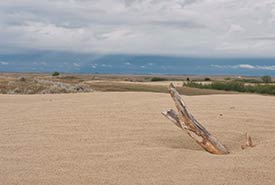 The vista at the Great Sand Hills, SK (Photo by Bill Armstrong)