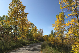 Fall colours lining the bike path (Photo by Gayle Roodman/NCC staff)