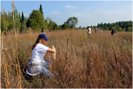 Fall seed collection on the Rice Lake Plains, ON (Photo by NCC)