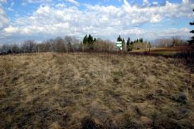 Fescue prairie in May (Photo by Diana Bizecki Robson)
