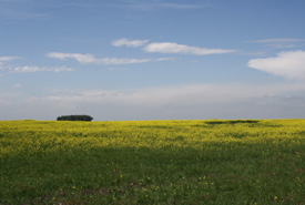 An agriculture field near Oldman River just west of Lethbridge (Photo by Doug Madill)