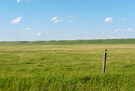 Two properties were made up mainly of grassland, while the others were a mix. (Photo by Paula Cimprich)
