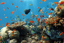Tropical fish swimming among corals (Photo by Pixabay)