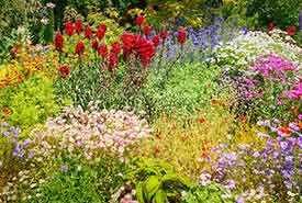 Flower meadow (Photo by Albrecht Fietz)