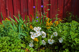 Flowerbed (Photo by Bengt Nyman, Wikimedia Commons)