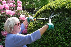 Gardening (Photo by Hans Bernhard/Wikimedia Commons)