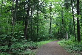 Gillies Grove trail (Photo by Asha Swann/NCC intern)
