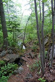 Shaw Wilderness Park trees (Photo by Katie Diespecker/NCC intern)