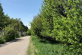 Spring 2019 green-up along my bike route. (Photo by Gayle Roodman/NCC)