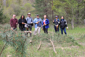 Staff banded together to cut down invasive Scotch pine. (Photo by NCC)