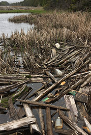 Head of the Long Creek marsh in late May 2019. (Photo by NCC)