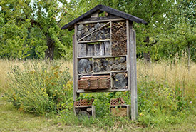 An insect hotel (Photo by Marzena7 CC0)