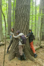 2021 Conservation Interns Isabelle Roy, Ashley Harricharan and Nat Gray hugging eastern white pine tree at Gillies Grove, ON (Photo by NCC)