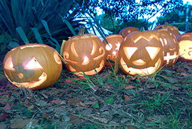 Jack-o-lanterns (Photo from Creative Commons)