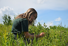 Conservation Intern Jayme Ladouceur identifying plant species (Photo by NCC)