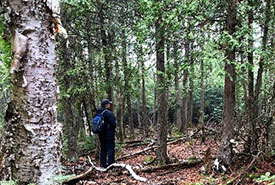 Nearly untouched globally rare alvar and cedar forest. (Photo by NCC)