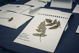 The Herbarium Project, 2017, Contemporary Art Gallery, Vancouver, BC (Photo by Four Eyes Portraits)