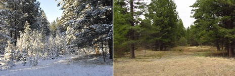 Columbia Valley - Lot 48, before and after restoration (Photo by NCC)