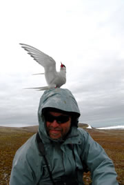 Mark Mallory with common tern (Photo courtesy of Mark Mallory)