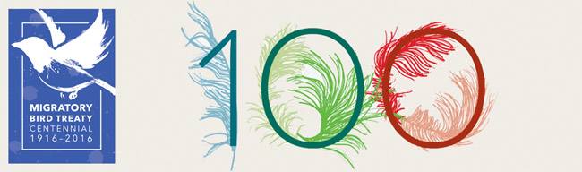 Centennial of the Migratory Bird Treaty (Graphic by U.S. Fish & Wildlife Service)