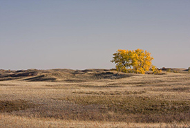 When you think of Saskatchewan, your first thoughts probably go to flat cropland, rolling grasslands, sunsets and open horizons — and not forests. (Photo by NCC)