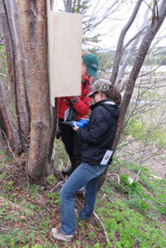 Megan Lafferty (NCC) and Danielle Fequet (DUC) installing one of the nest boxes (Photo by NCC)