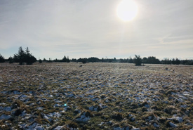 The Napanee Plain Alvar Nature Reserve glowing in the morning sun (Photo by NCC)