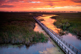 Point Pelee National Park, Essex County in southwestern Ontario, where it extends into Lake Erie. (Photo by Neil Ever Osborne)
