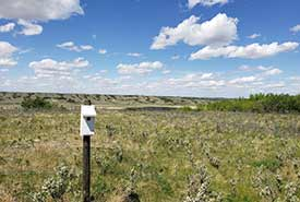 A nest box in NCC's Fairy Hill property in Saskatchewan (Photo by NCC)