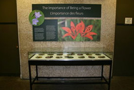 A new, temporary exhibit on seeds in the museum's foyer. (Photo courtesy of Manitoba Museum)