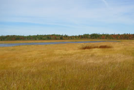 North Enmore nature reserve, PEI (Photo by Troy McMullin)