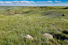 Milk River Basin Natural Area, SK (Photo by NCC)
