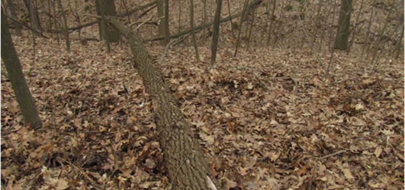 A healthy, southern Ontario forest floor in March.