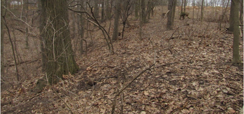 Almost exactly a year later: this is what most forest floors in southern Ontario should like in March – not green!