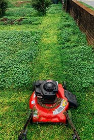 For some people, participating in No Mow May and beyond might be mowing just a little less, or leaving a small area in linger grass. (Photo by Kelly Lacy, Pexels)