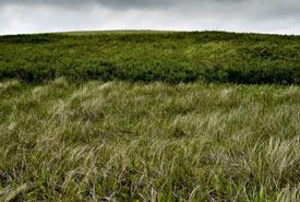 Vegetation at Shoe Lake West (Photo by Gail F. Chin)
