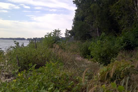 Habitat after burning, Pelee Island ON (Photo by NCC)
