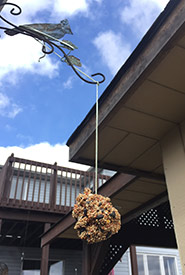 Step five: Install the bird feeder (Photo by NCC)